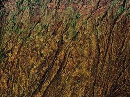 Dark Brown Wood Texture photo