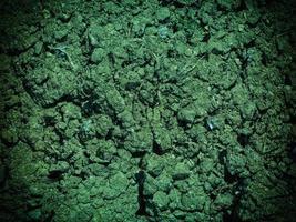 textura de suelo de agua verde foto