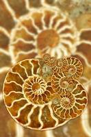 Artistic Fossil Pattern photo