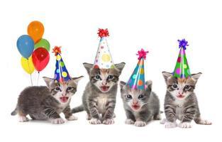 Birthday Song Singing Kittens on White Background photo