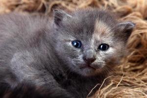 Newborn Kitten in a Basket photo