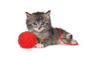 Gatito juguetón con bola roja de hilo foto