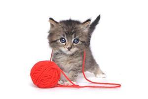 pequeño gatito jugando con bola roja de hilo foto