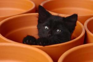 lindo gatito soñoliento dentro de una olla de barro foto