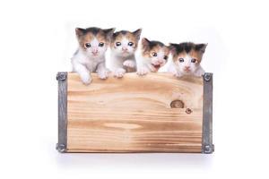 linda caja de gatitos en adopción foto