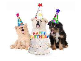 Puppies Singing Happy Birthday Song With Cake photo