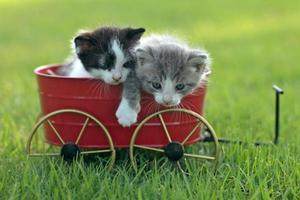 Kittens Outdoors in Natural Light photo