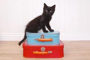 Black Kitten Sitting Atop Luggage on White photo
