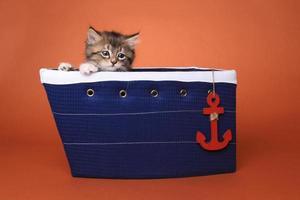 Maincoon Kitten With Big Eyes photo
