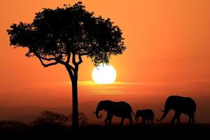 Beautiful Silhouette of African Elephants at Sunset photo