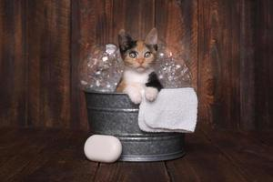 Kittens in Washtub Getting Groomed By Bubble Bath photo