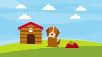 happy dog in the field wooden house and plate food animation video