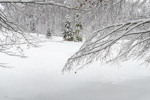 Dusk and colors of the snowy forest. Snow and cold. photo