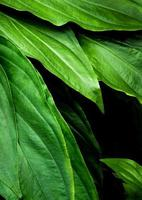 Freshness tropical leaves surface in dark tone as rife forest background photo
