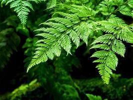 Frescura hojas de helecho con musgo y algas en el jardín tropical foto
