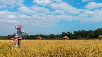 Time lapse Cloud moving over rice fields. Zoom out video