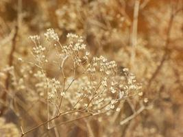 Dry autumn grass background with soft bokeh photo