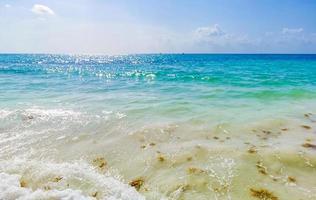 Red seaweed sargazo beach Punta Esmeralda Playa del Carmen Mexico photo