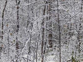 texturas de nieve invernal, árboles y plantas heladas. foto