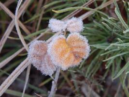 bosque de invierno, la textura de la naturaleza, el follaje y las plantas foto