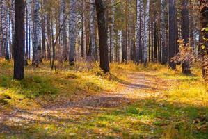 Ruta de senderismo en el bosque de otoño salvaje, concepto de turismo foto