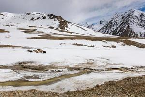 Yaks on highland plateau of Khunjerab national park photo