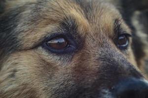 dog face close up. homeless dog photo