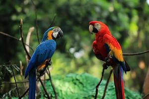 Two macaws perched on a tree branch photo