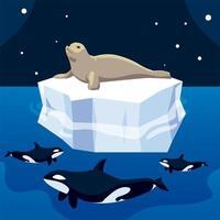 killer whale hunting seal on iceberg, north pole vector