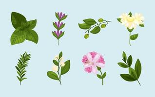 eight spring nature icons vector