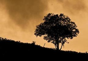 A mature old  tree spreads its branches out on a country slope photo