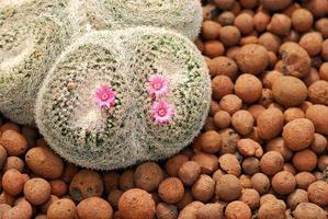 hermosas plantas de cactus en el jardín foto