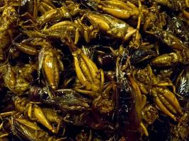 Crispy fried insects  are regional delicacies in many Asian countries like Thailand photo