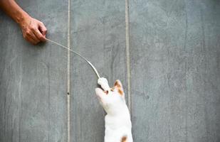 Cute cat playing photo