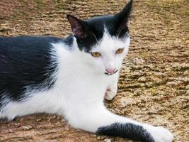 cute cat with bright eyes lying on concrete photo