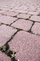 Cobblestone floor with moss photo