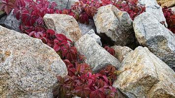 Fondo de piedra con ramas de plantas. ramas con hojas verdes. montículo de granito. foto