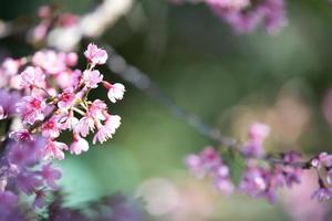 hermoso fondo de flor rosa foto