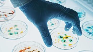 Microbiology Laboratory Petri Dishes with Various Bacteria Samples, Pipette Drops Liquid Solution video