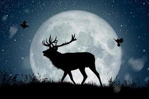 silueta de reno de pie en la colina bajo la luna llena en la noche de Navidad mientras dos pájaros vuelan alrededor. foto