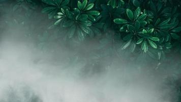 Vertical garden with tropical green leaf with fog and rain, Dark tone photo