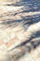 Palm shadow on the tiled floor photo