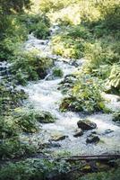 Cascada corriente del río en el bosque verde de la naturaleza foto