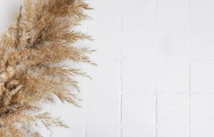 Flatlay of pampas grass on tile background photo