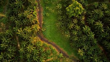 Top View Photo of Unpaved Road Surrounded by Trees