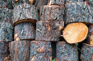 Of cut tree trunks stacked photo