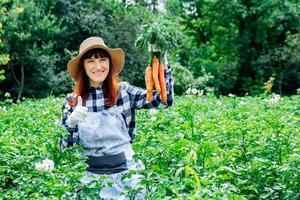 La agricultora sostiene un montón de zanahorias en el fondo de la huerta, sombrero de paja y rodeado por las muchas plantas en su huerta foto