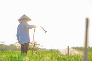 farmer is watering her onion field, in the sunny afternoon photo