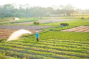 granjero está regando su campo de cebolla, en la tarde soleada foto