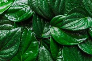 background image covered with green leaves photo